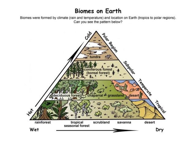 biome_pyramid