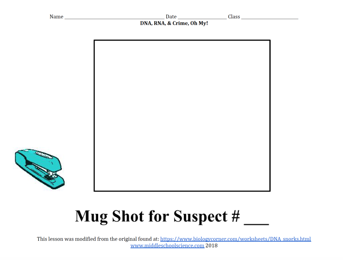DNA, RNA, & Crime, Oh My! (Modified Snorks Activity ... Biologycorner Worksheet Answers on
